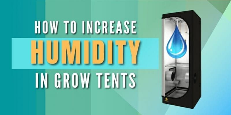 How to Increase Humidity In Grow Tent (8 Tricks to Get Results Today)